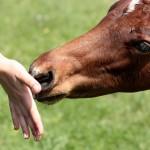 horse-1341775_960_720