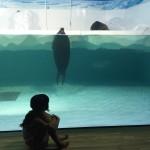 【参加無料】琵琶湖博物館の全6回講座の内容がスゴイ!今から予定を押さえておきましょう