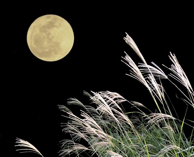 月見 秋 すすき 夜