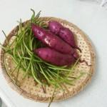 食べたことがありますか? さつまいもの茎が美味しい!佃煮にすると白ごはんが進むおかずになるのです。
