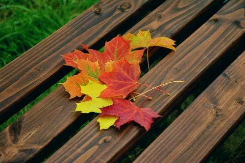 fall-foliage-1740841_960_720