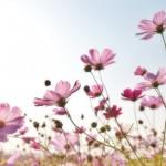 flowers-1476517_960_720