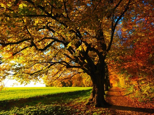 tree-779827_960_720