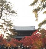 【見ごろ】京都 南禅寺 ひらひら舞う銀杏や紅葉がCMの様。歩いて10分の京都市動物園とセットで行くのもお勧め。