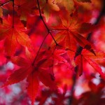 autumnal-leaves-1352197_960_720