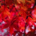 autumnal-leaves-1352197_960_720