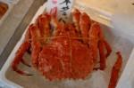 鳥取県に泊まって旬のカニを当てよう!『ウェルカニキャンペーン』実施中!