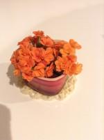 お部屋にお花を飾ってみるなら、カランコエがおすすめです♪お手入れも楽ラク♪