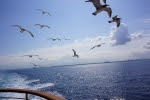 """毎年恒例の""""びわ湖開き""""で豪華客船ビアンカに乗船出来ます!☆先着300名、乗船料1000円(乳幼児も同額)"""