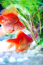 金魚のエサは100均で見つけたこれで保管!見た目も使い勝手もGOODです!