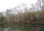 2月19日は東近江市にて伊藤園主催の「ヨシ刈り体験イベント」が開催!琵琶湖博物館見学もあり!家族で琵琶湖の環境について学ぼう♪