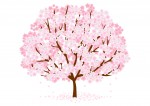 草津で桜を楽しもう!4月8日(土)は草津川桜557(いいな)フェスタin2017へ!