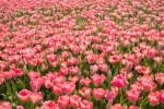 【5月7日(日)】ゴールデンウィーク最終日はブルーメの丘へ♪ 「oh!umi ブルームフェスタ」開催!出店者募集中