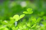 3月11日は長浜市で「環境にやさしい生活フェア」が開催!楽しみながら環境について学ぼう!サイエンスショーやキッズ工作コーナーもあり♪
