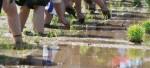 土と触れあい、収穫の喜びを体験しよう♪アグリパーク竜王で「田植え体験&稲刈り体験」の参加者募集中!