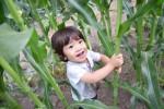 楽しく食育!草津市で「トウモロコシ種まき体験」参加者募集中!参加無料、申込は5月8日まで!