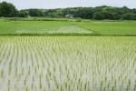 田んぼにいる色々な生きものを採取して観察しよう!☆事前申込、参加費無料、小学生対象