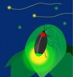 """美肌の湯""""三重県津市の榊原温泉""""では、6月1日から蛍灯(ほたるび)がスタート!豊かな自然の中で温泉とホタルを楽しもう!"""