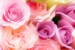 5月14日の母の日は能登川のエトコロで癒されよう。母の日マルシェが開催されますよ!
