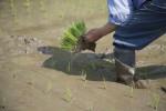 イオンモール草津で参加無料の「田植え体験イベント」が開催!家族で自然に触れる楽しさを体験しよう!ただいま参加者募集中!