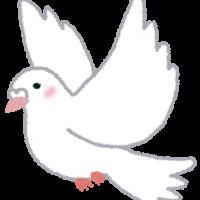 bird_shiro_hato