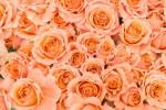 【5月7日(日)】子ども向け「和ばら」の花束ワークショップ!母の日のプレゼントにもぴったりです