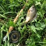 魚釣りををして琵琶湖を綺麗にしよう!☆事前申込、参加費無料、釣り竿の貸出無料