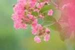 誰でも参加OKの自然観察会に参加しませんか!ルーペを片手に花や虫を観察しよう!☆参加費無料、要申込