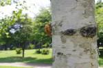 琵琶湖の湖畔で自然体験!7月9日は大津市木の岡ビオトープで「昆虫観察会と自然教室」が開催!森の色を見つけに行こう!