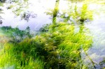 夏休みの宿題にピッタリ!琵琶湖のプランクトンや水草を調べる体験学習があります!☆要申込、参加費無料、子どもだけの参加OK