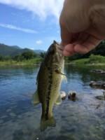当日参加OK!「びわこルールキッズ釣り大会」で外来魚を駆除しよう!☆一般参加OK、参加費200円、釣り竿の貸出あり