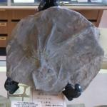"""キラキラ輝く石や恐竜の化石が好きなら""""益富地学会館""""へ 石の不思議や魅力を親子で感じてみませんか!"""