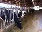 8月24日は畜産技術振興センターで「親子バターづくり教室」が開催!牛舎見学や牛とのふれあいも楽しもう♪申込は8月2日まで!