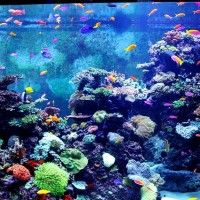 colorful-aquarium-216701_640