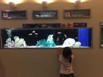 日帰りで行ける!ちょっと遠いけどコスパ最高な水族館「丹後魚っ知館」がオススメ!!