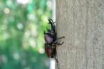 8月6日はロクハ公園で「昆虫ウォッチング」が開催!専門家と一緒に昆虫観察を楽しもう♪