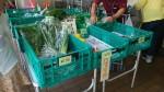 こんなところに直売所!?毎週金曜日に西武大津店前で完全無農薬の新鮮野菜・果物が売られています☆