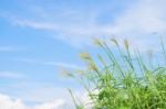 乗り物好きキッズ集まれ!9月23日は「長浜ロードトレイン祭」が開催!ふれあい動物園やフリマもあり♪