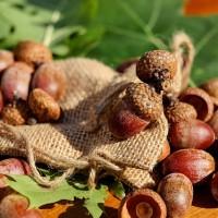 acorns-1710577_640