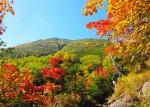 5歳~参加出来る「山の日」に大津の自然を楽しもう!年齢に合わせて3コースあります!☆要予約、小学6年生まで