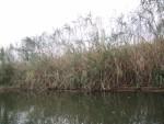 11月11日は野洲市で「ヨシ苗の植え付け体験」が開催!家族で琵琶湖の環境保全に参加しよう♪ヨシ笛コンサートもあり!