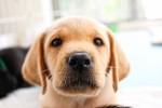 盲導犬「クイール」の映画を観よう!子犬から生涯を終えるまでの感動の物語!☆申込不要、入場無料