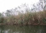 親子で環境保全ボランティアをしよう!2月18日は近江八幡市で「西ノ湖ヨシ刈り体験」が開催!事前申込不要!