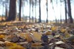 【1月28日】冬の森をゆっくり歩こう!自然くらぶ「のやまであそぼう」開催☆参加費300円♪