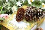 de愛ひろばで「松ぼっくり おひな様づくり」♪自然素材で自分だけのおひな様を作ろう!