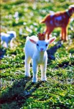 羊毛フェルトで出来たリアルでかわいい動物たちに癒される♪愛知川びんてまりの館にて「YOSHiNOBU 羊毛フェルトの動物たち」が開催中です!