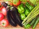 野菜の栽培を始めてみませんか!上手な育て方を教えて貰えます!☆要申込、参加無料