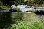川の生き物を採集して観察しよう!4歳から参加OK!☆要申込、参加費1家族500円