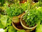 カラーサンドやオシャレなガラスを使って「多肉植物のテラリウムを作ろう」♪6月15日竜王A GARDEN CREWにて☆