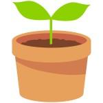 《6月3日》フェリエ南草津で「観葉植物ミニ鉢プレゼント」が実施!1,000円以上お買い上げ、先着100名♪